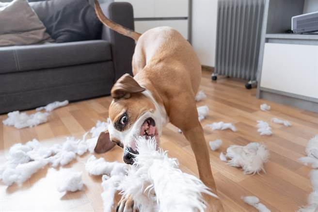 幼犬不聽話連遭5家庭退養 遇新主人才知眾人全教錯