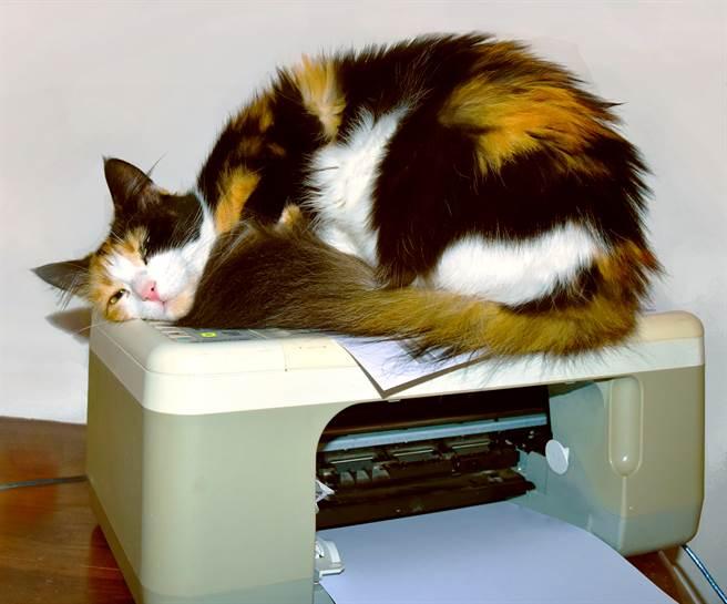 貓皇趴影印機卡位不動 無碼照曝粉肉球網驚:有腹肌