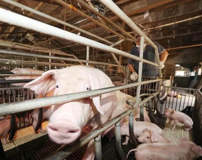 針對開放含有萊劑的美國豬肉進口引發食安疑慮,立法院法制局報告指出,衛福部應對孕婦、兒童、老人等特殊族群健康風險評估更周全。(資料照,陳怡誠攝)