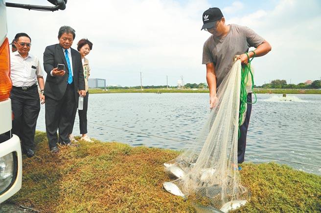 台南市立委陳亭妃(左三)與台南市議長郭信良(左二)在安南區魚塭關心養殖戶生計。(程炳璋攝)