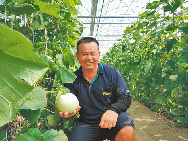 郭德杉種植的「嘉玉」美濃瓜,平均每顆700公克重、糖度可達14度。(張毓翎攝)