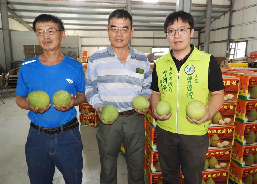 市議員曾朝榮服務處主任曾咨耀(右)說,要選一顆好的大坑柚子,首先要看柚子底部屁股是不是圓又大,拿在手上「惦一惦」要有重重的份量。(陳世宗攝)