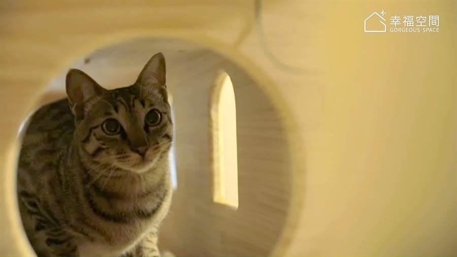 40坪義式工業風 貓咪與我的靈感宅