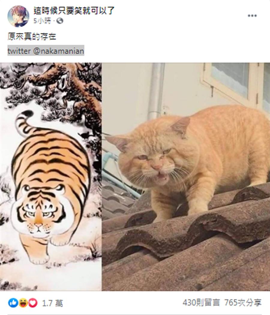1名網友在臉書社群上分享了一張萌貓下山風景照,引起網友的熱烈討論,也令多數人感到非常療癒。(臉書社群 這時候只要笑就可以了翻攝)