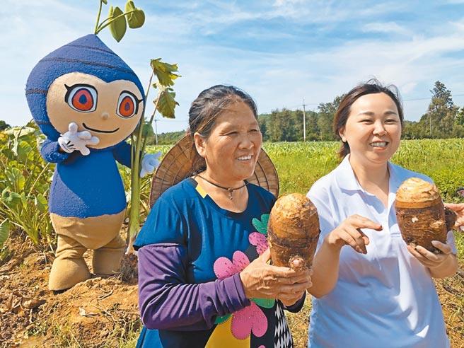 小金門芋頭入口即化,香鬆綿的特點遠近馳名。(李金生攝)