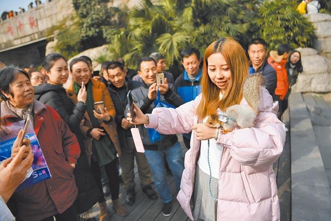 重慶觀音橋步行街上一市民用繩子牽著一隻寵物松鼠逛街,引來不少民眾觀看拍照。(中新社資料照片)