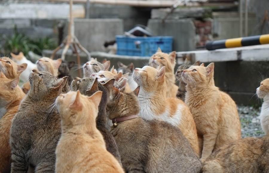 媽媽留下的18隻貓咪,不僅需花時間照顧,伙食費用等也是問題(示意圖/達志影像)