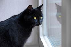 黑貓趴地側躺睡覺 主人驚見鏡中影像竟是另隻貓