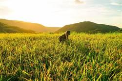 農業再生十年有成 結合5縣市展新北三寶