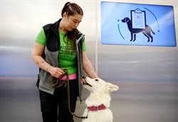 只要10秒!芬蘭機場狗狗嗅新冠病毒 準確率幾乎百分百