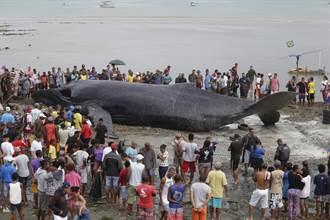 座頭鯨意外擱淺「無助癱地等死」 30遊客急衝上前搶救援