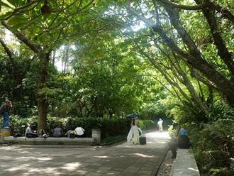 都市樹下好乘涼 炎夏正午與林外最高差10度