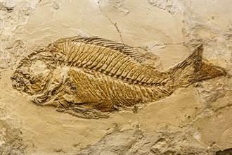 土石流落下巨大「魚骨紋」怪石 專家一看驚:是2億年前化石