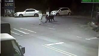 女深夜遛獒犬被街友嗆 2男痛毆他「無視求饒」活活打死