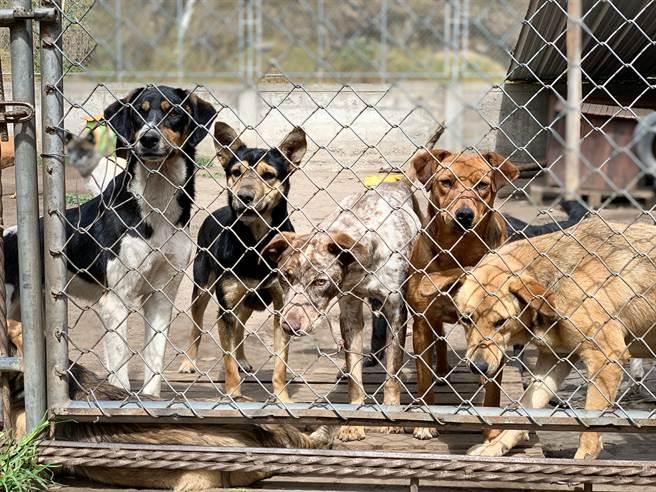 30隻左右的狗疑似已被安樂死,屍體被整齊的排在走道上(示意圖/達志影像)