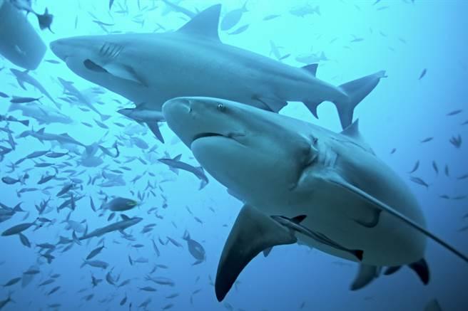 孕妻看到海上出現鯊魚背鰭,隨後發現海面上全是血,趕緊跳入水中救夫(示意圖/達志影像)