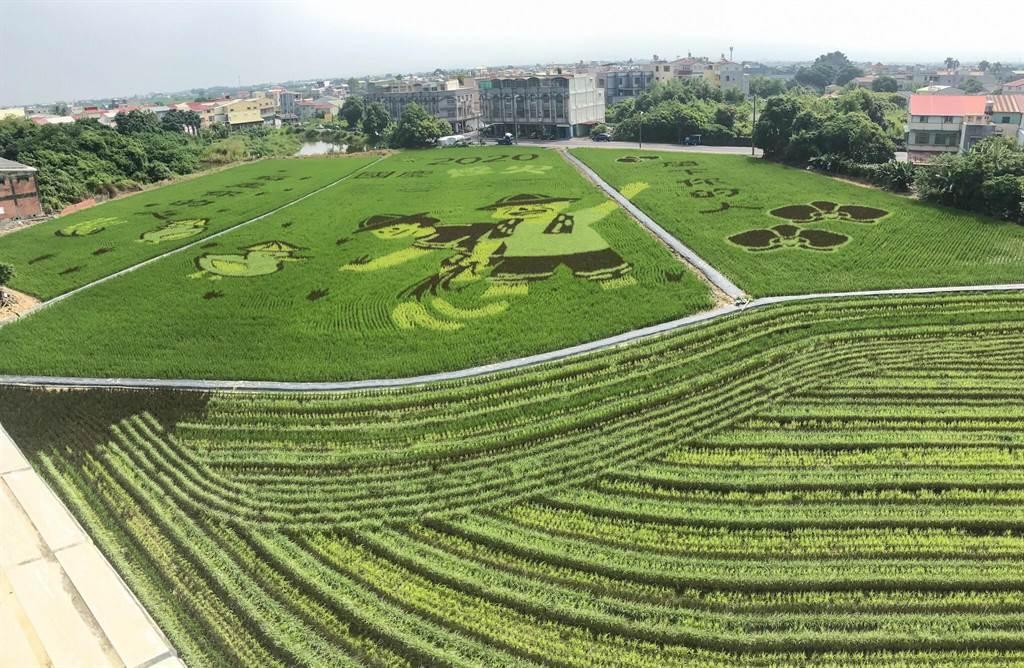 2020台南好米季於10月1日開跑,後壁區農會四樓開放民眾參觀,俯瞰彩繪稻田。(周書聖攝)