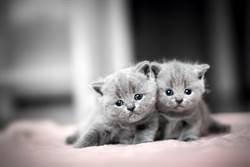 撿流浪小灰貓回家養 隔天「驚人變色」模樣仙爆