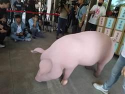 美豬開放憂食安 總統:台灣豬不怕競爭