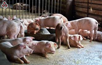 知名雜誌列5點「美豬不輸台豬」 宅神怒:拿很多錢才寫得出來