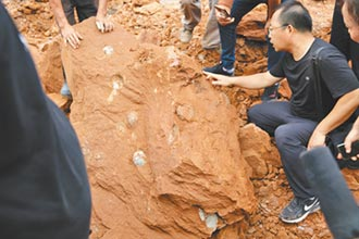 工地驚現9000萬年前恐龍蛋
