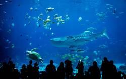 水族館認錯魚展出20年 專家比對驚覺「瀕臨絕種新品種」