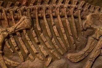 8千年前墓穴出土陪葬狗 骨骸保存超完整專家驚「獨一無二」