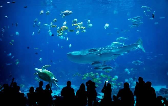 黑潮大水槽內飼養的及達尖犁頭鰩被認錯,牠竟是瀕臨絕種的新品種(示意圖/達志影像)