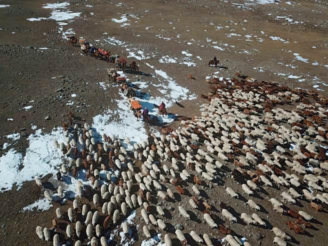 遷徙大軍開始移動時,我用空拍機跟隨拍攝。當羊群聚集不動時,畫面看似凝結了,羊群移動時則流暢似如歌的行板,這超乎想像的美,讓我心激動澎湃。(圖/講義雜誌提供)