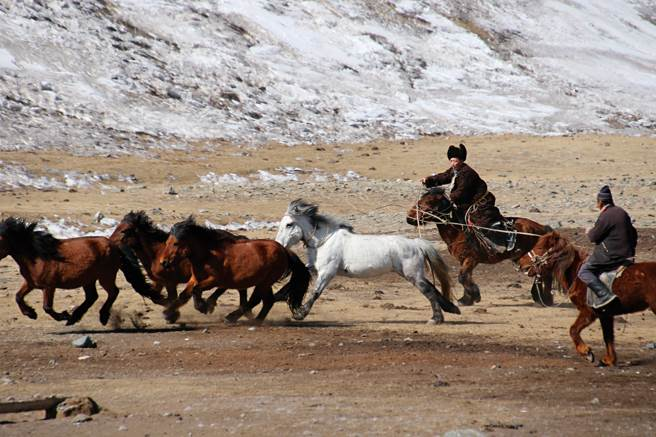牧民圈馬,讓我們見識到駕馭馬匹的高超技巧。(圖/講義雜誌提供)