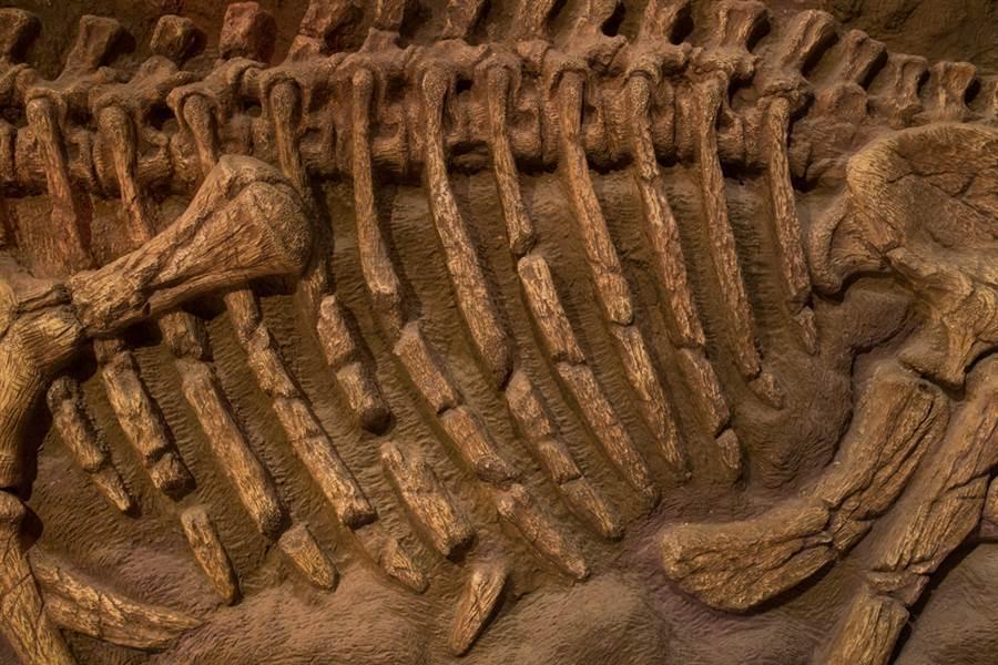 陪葬狗的骨骸保存非常完整,讓考古學家也驚呼連連(示意圖/達志影像)