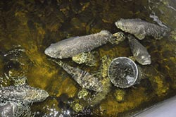 新世生技 研发石斑鱼黏液萃取
