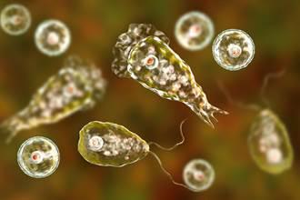 自來水出現致命吃腦變形蟲 美8城市受警告