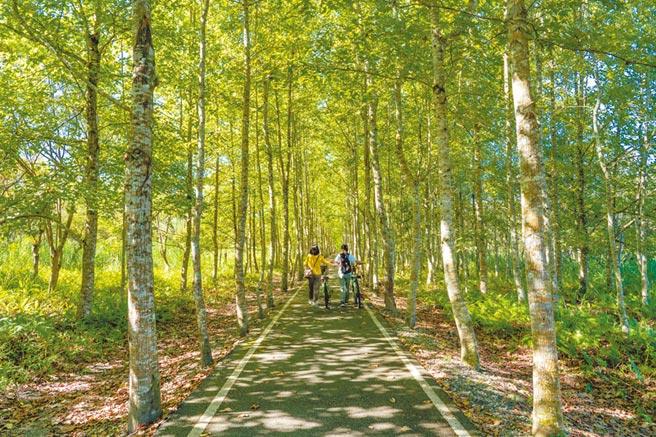 台糖全台有1萬公頃的造林地,因為要推動農電共生,遭指砍樹種電,台糖董事長陳昭義強調林相優良的都會保留,圖為台糖造林的大農大富平地森林園區。(台糖提供)