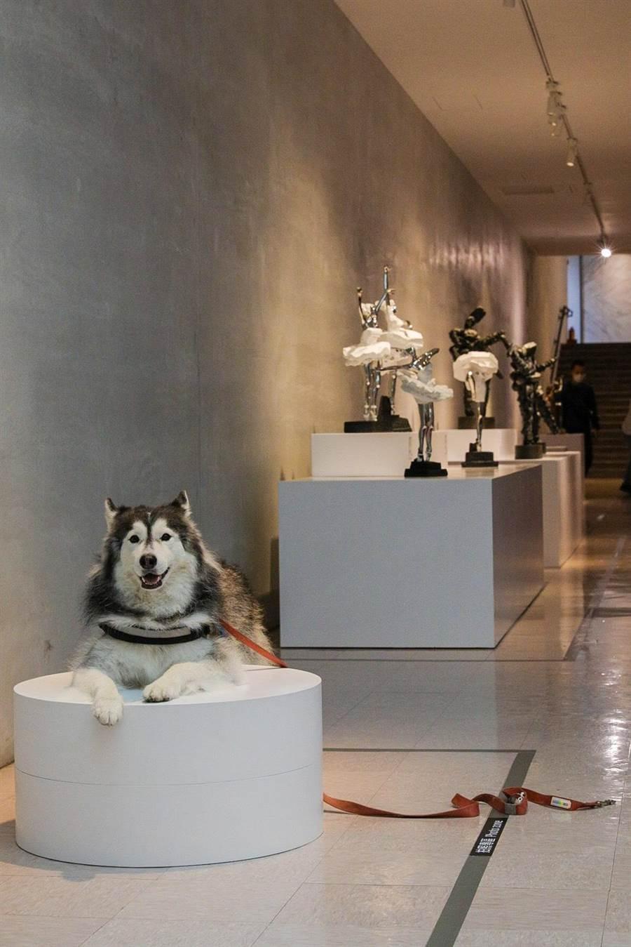 新北市政府動保處27日專為優良飼主舉辦「2020新北毛起來模範日暨世界狂犬病日」野餐活動。(動保處提供)