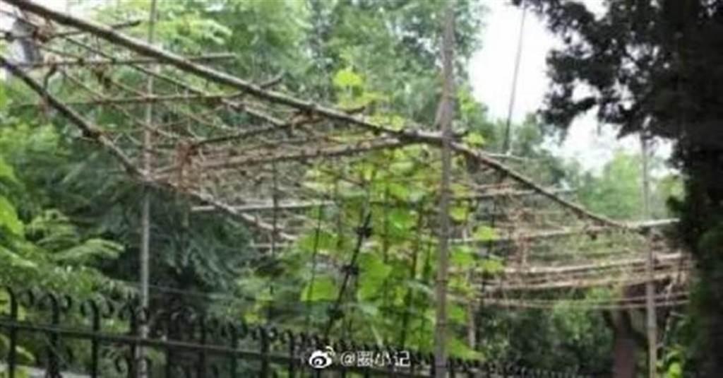 李連杰上億豪宅的花園如今成為菜園。(圖/微博)