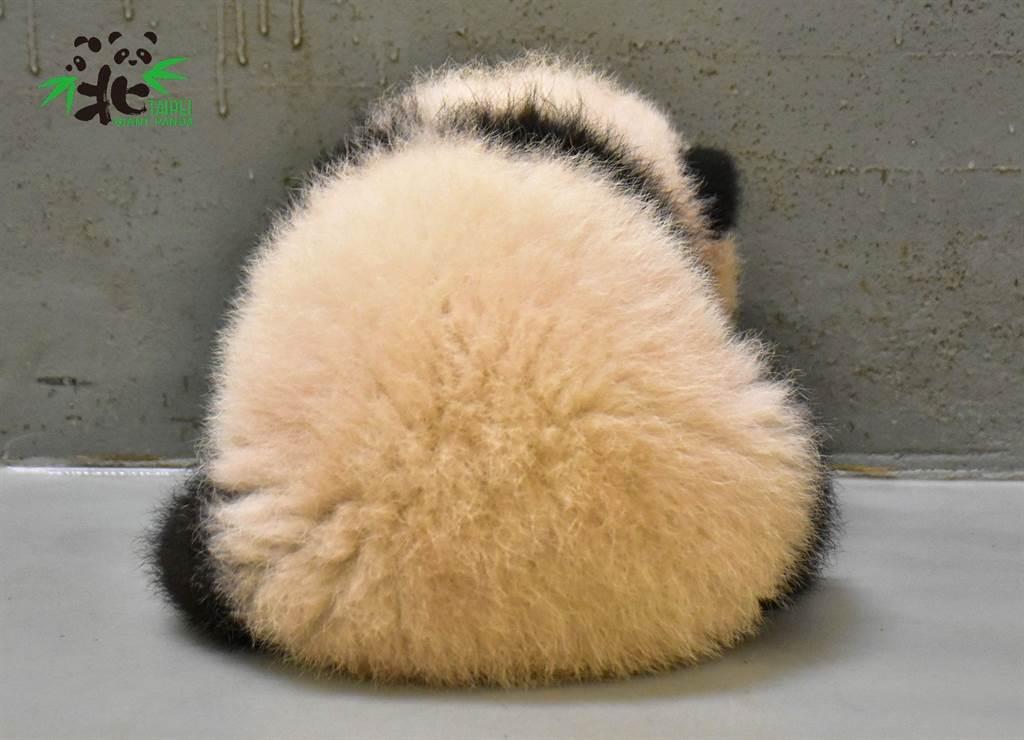 圓圓是圓寶生命中最重要的啟蒙導師(圖/臺北市立動物園提供)