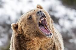 森林打獵忙收屍  男一回頭竟遭巨熊猛擊慘死