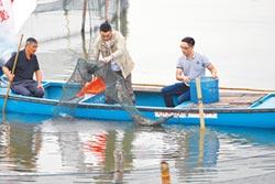 天價陽澄湖大閘蟹 99%是假貨