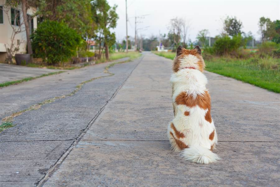 天兵媽出門遛狗忘帶回家 急衝下樓見落寞背影超揪心(示意圖/達志影像)