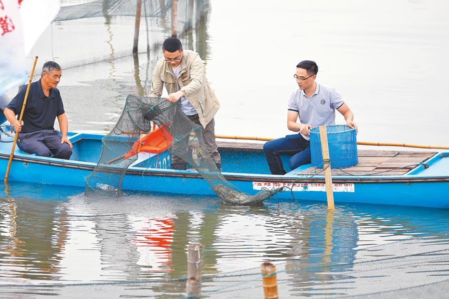 9月21日,養殖戶在蘇州陽澄湖捕撈大閘蟹。(中新社)