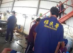 台灣海鮮太美味 非法移工吃到忘我沒發現移民官「站背後」
