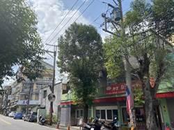 龍潭路樹生長茂密 民眾憂雨天將出現導電意外