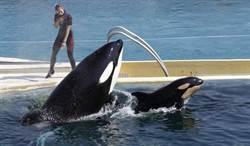 法國禁止馬戲團與海洋公園使用野生動物