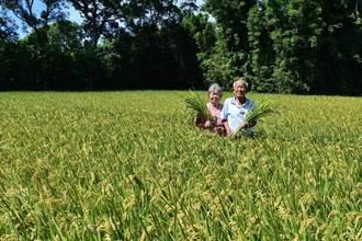力推環境永續 楊梅老夫妻加入友善耕作行列