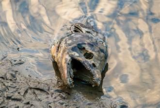 月子餐驚見「猙獰銳齒」恐怖魚頭 內行狂喊超補:傻傻的