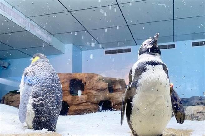 青埔 Xpark 族館是日本橫濱「八景島水族館」首座海外分館。(圖/業者提供)