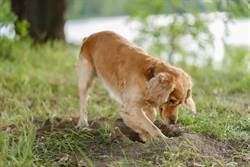 痛失幼崽!狗媽親自「挖洞造墳」最後一幕惹鼻酸