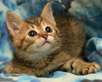 小奶貓被吸塵器聲音嚇歪 「學松鼠卡洞」遮耳朵壓壓驚