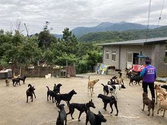 三芝流浪動物之家恐強拆 400隻浪犬無處去 園長苦嘆「合法化經費破百萬」